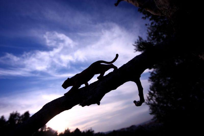 dawn dusk hunt cat