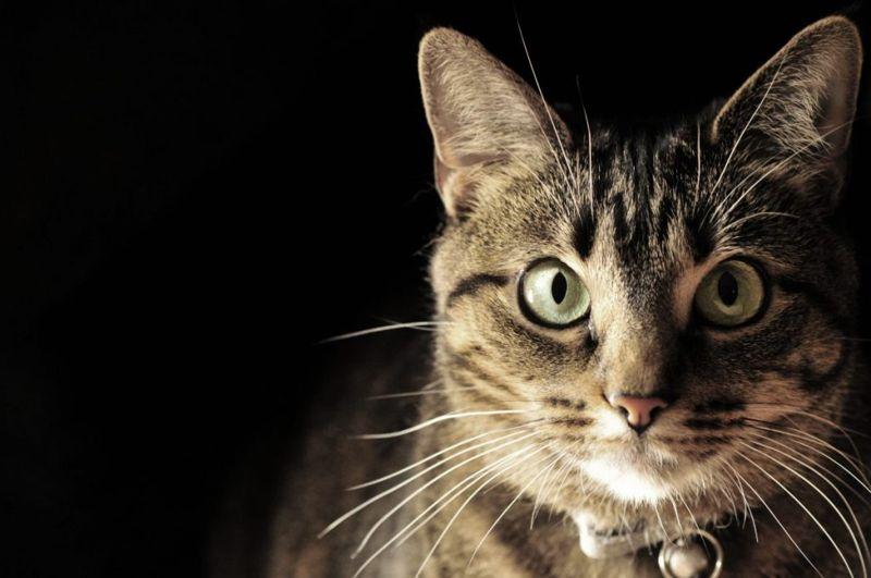 Cat's eyes in the dark