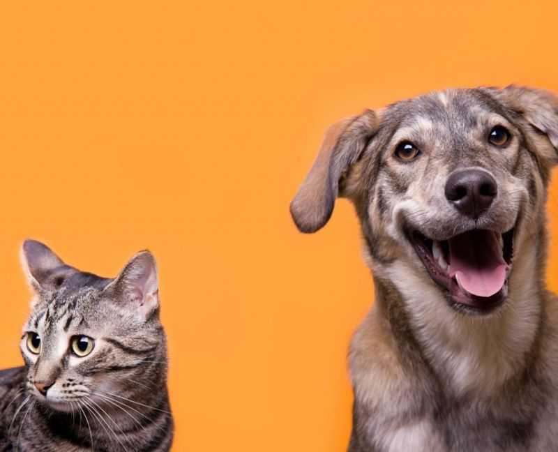 Dog and cat whiskers