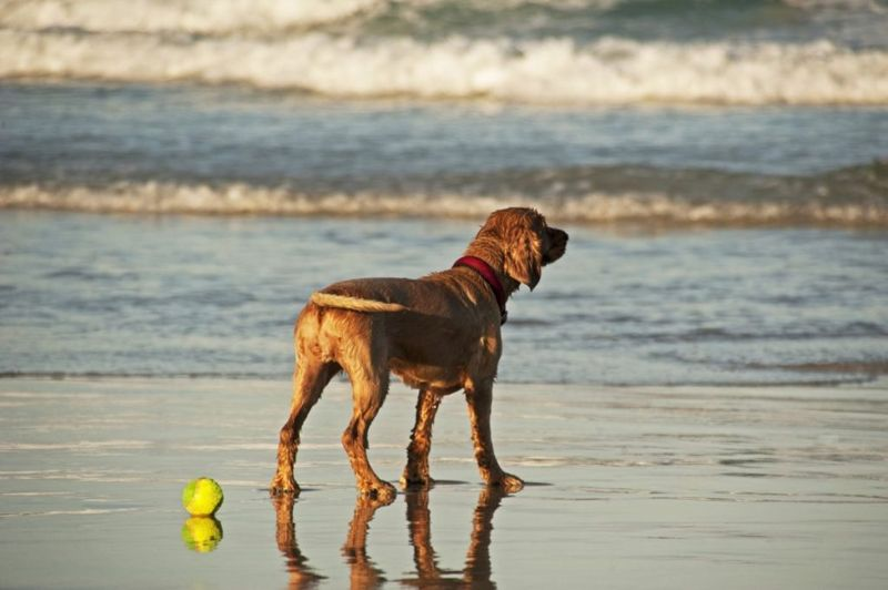 Dog wagging tail on beach