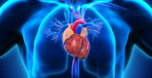 All About the Coronary Arteries