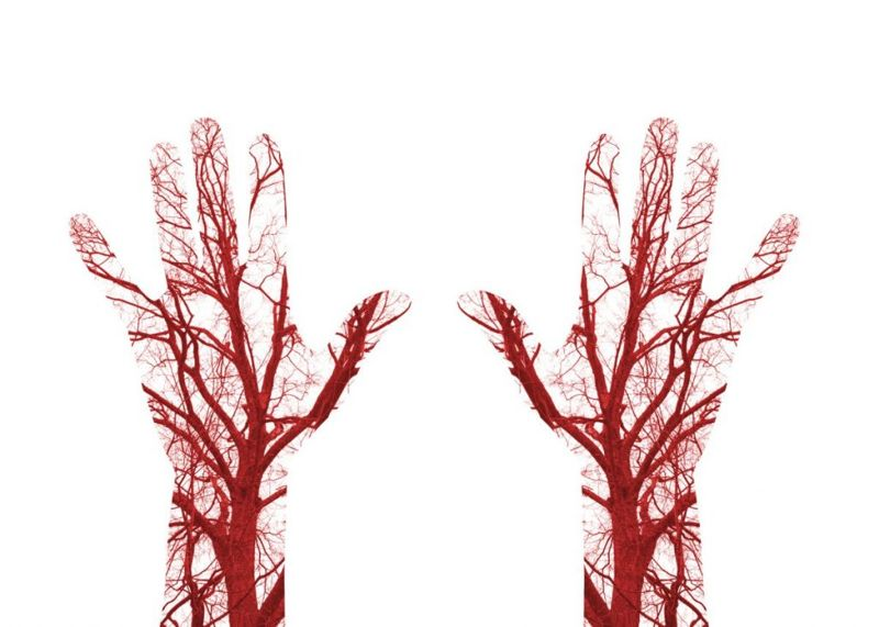 Blood Vessels Hand