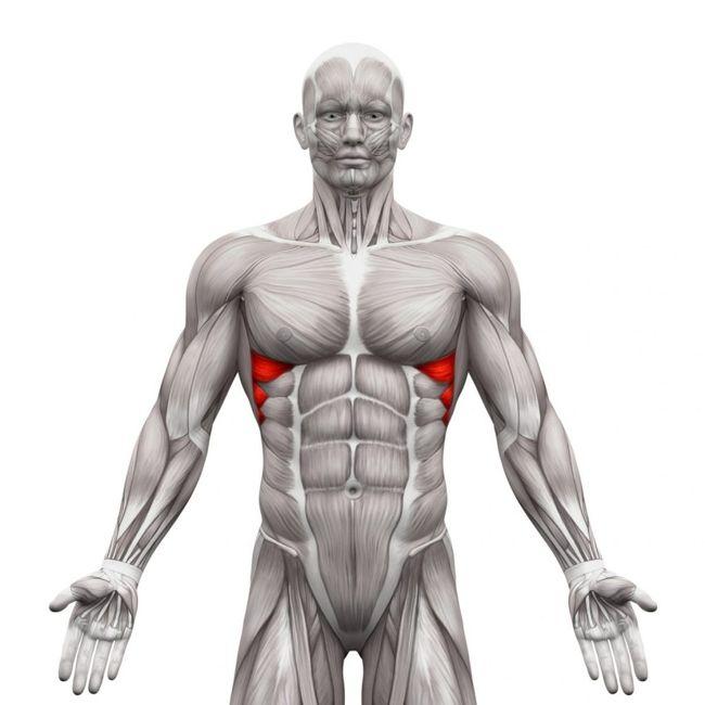 Serratus-anterior thoracic