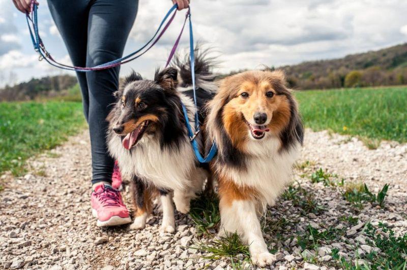 walk dog leash
