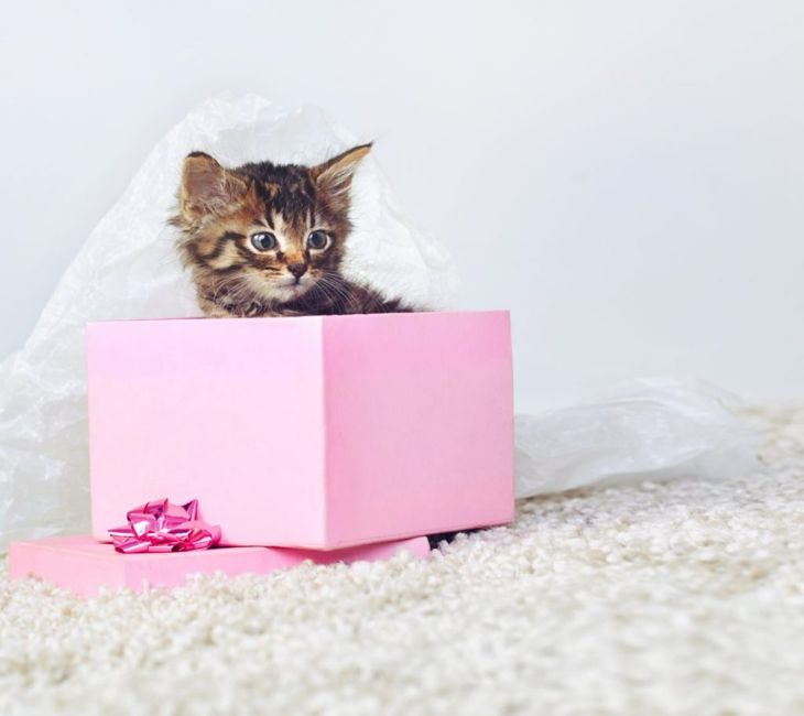 Coping better with a box