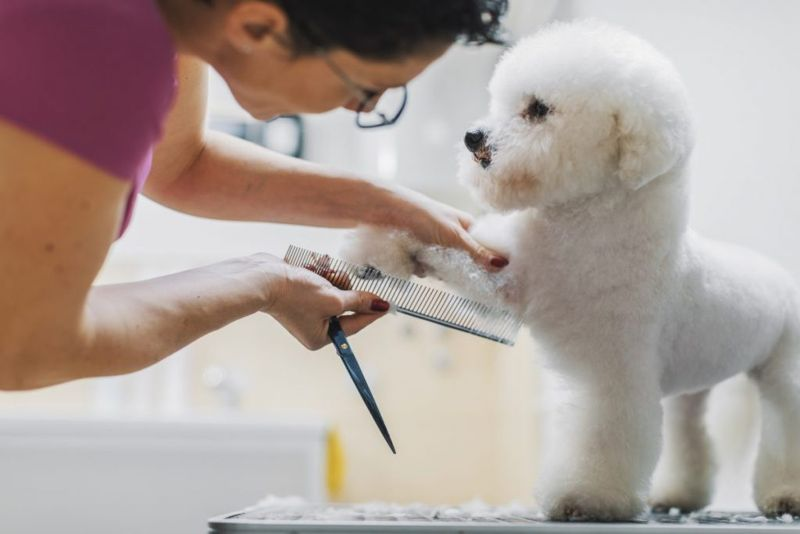 Grooming dog whiskers