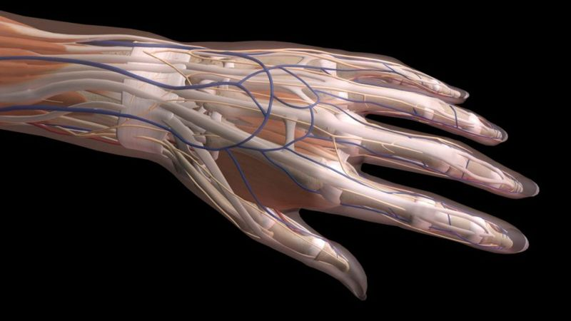 carpal ligaments connections