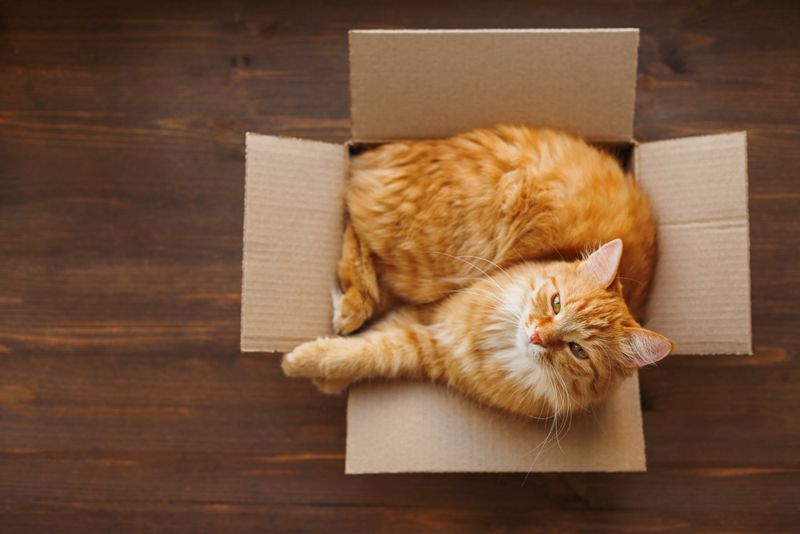 Ginger cat lies in box on wooden background.