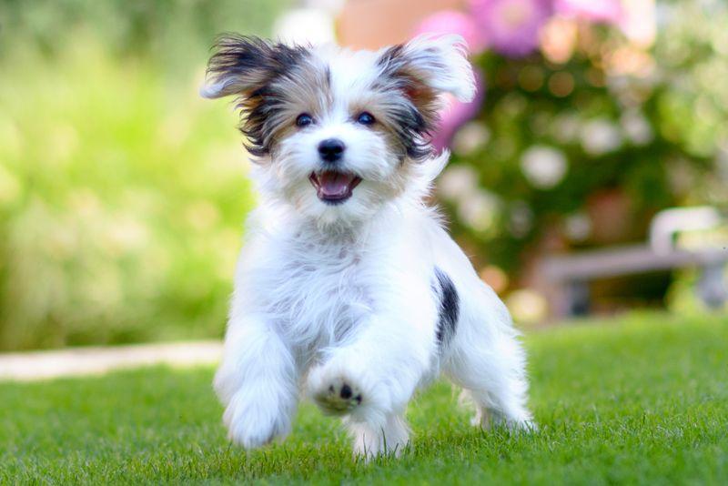 happy dog not in heat