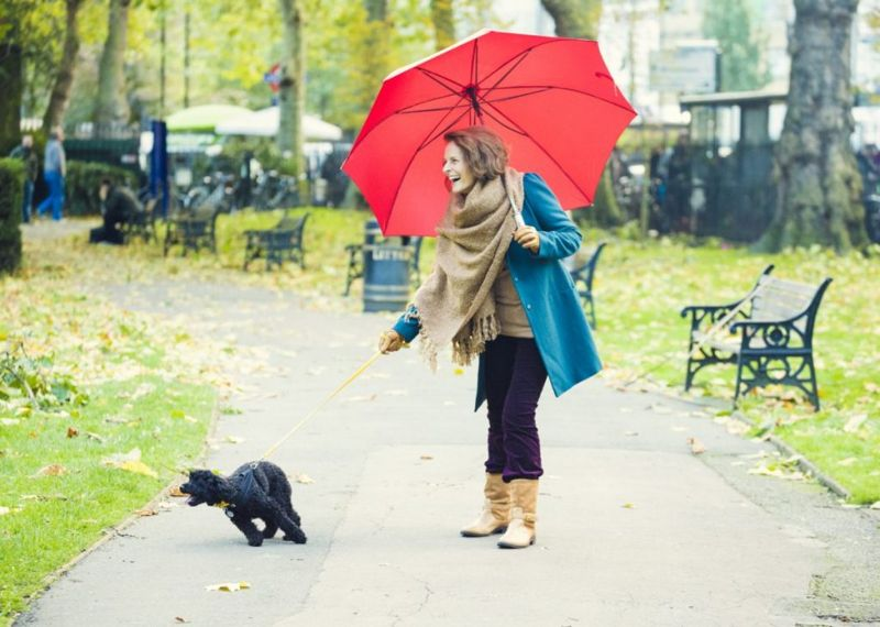 Poodle dog barking on walk