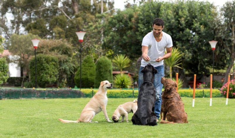 man training dogs animal empath