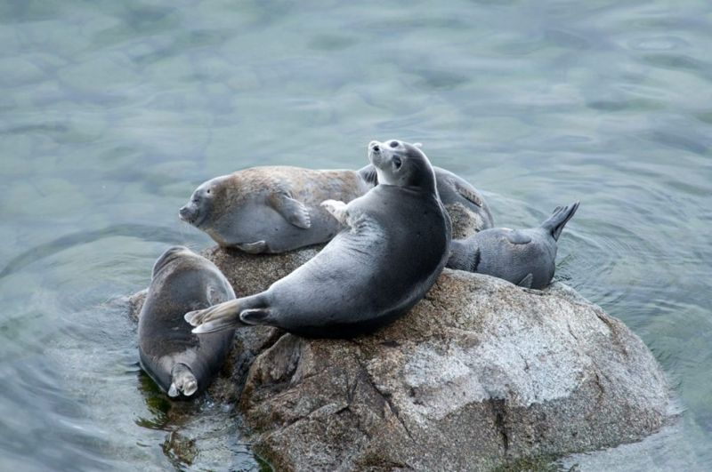 Home to Baikal Seals