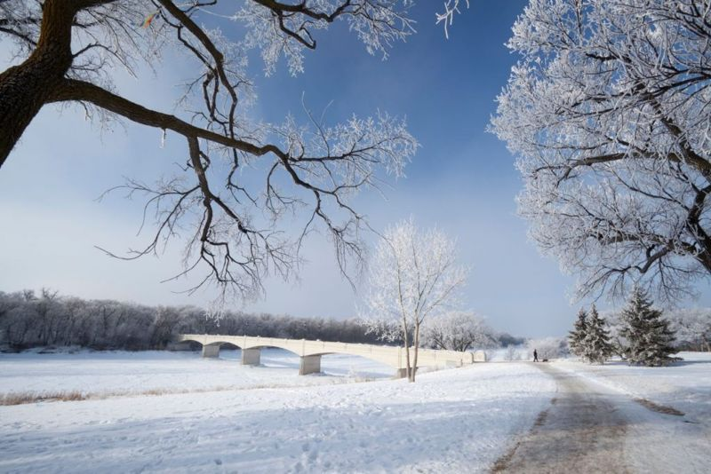 Assiniboine park is Winnipegs oldest and finest parks, visited by millions each year. Image with Hoar frost and a pedestrian bridge.