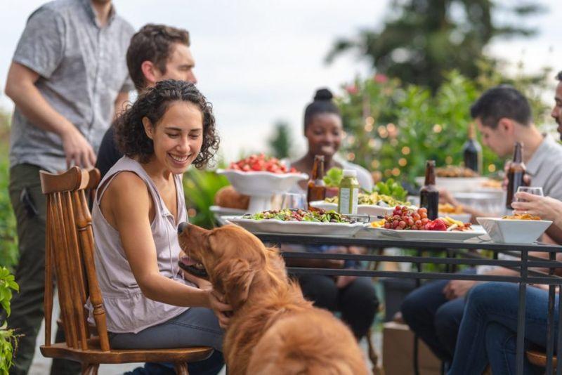 dogs, food, human
