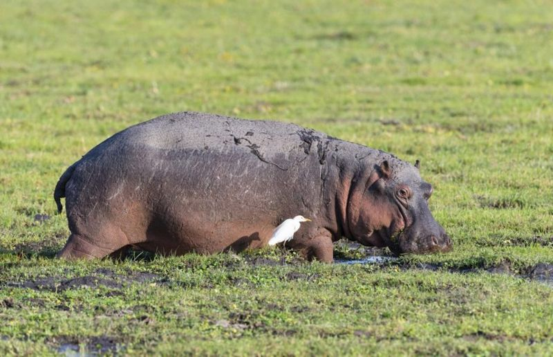 hippo sunscreen water