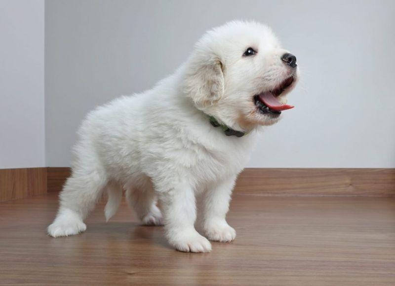 Puppies need to grow slowly