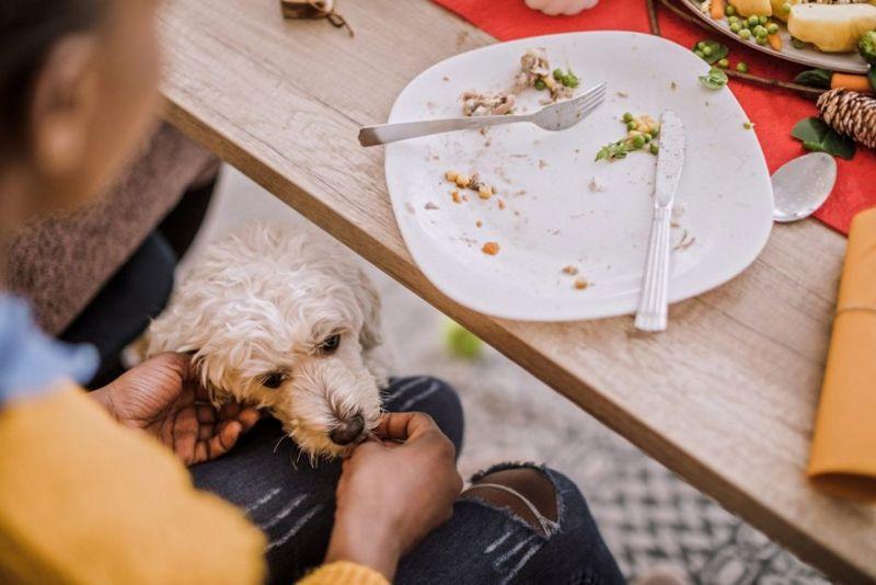 Dog Eating Scraps of Food