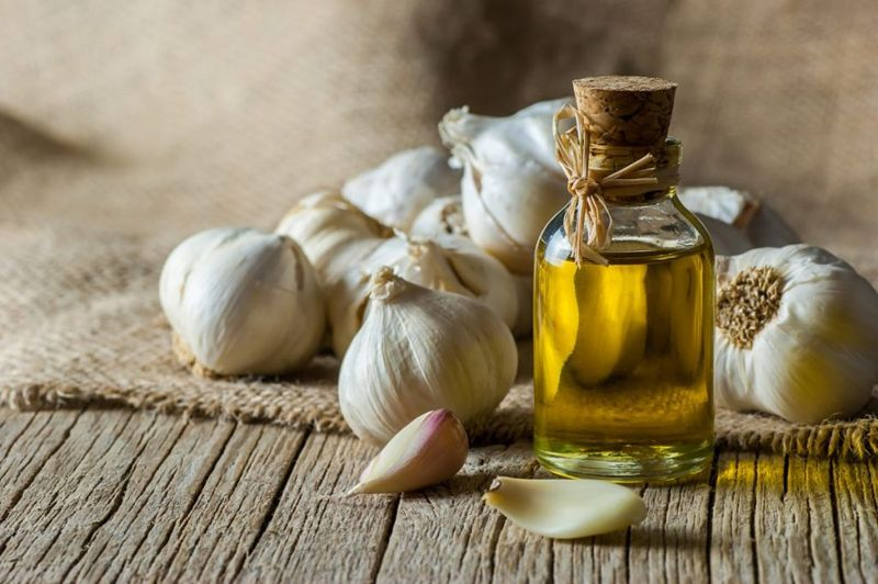 garlic fight infection