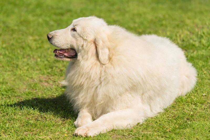 An independent dog