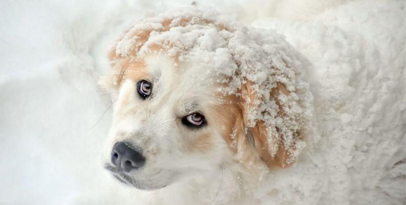 Prefer cold temperatures