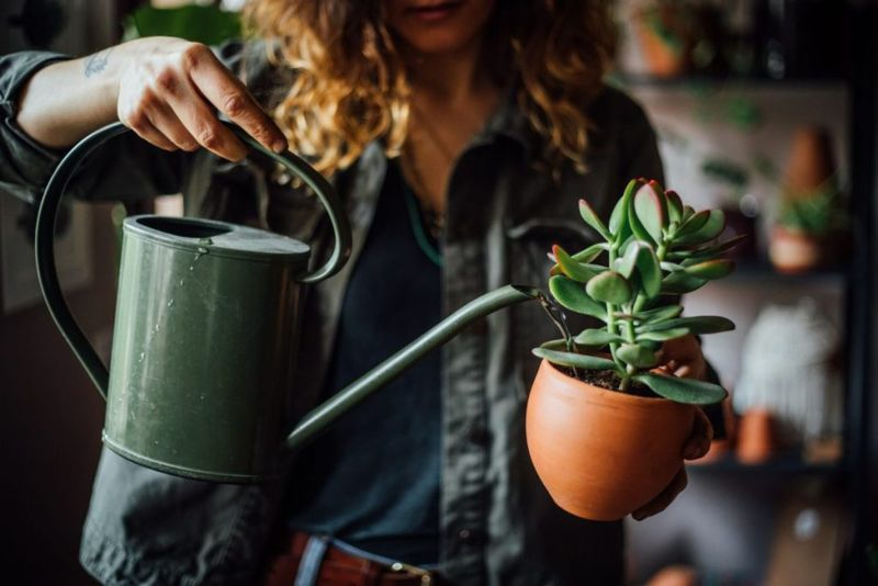 woman watering succulent