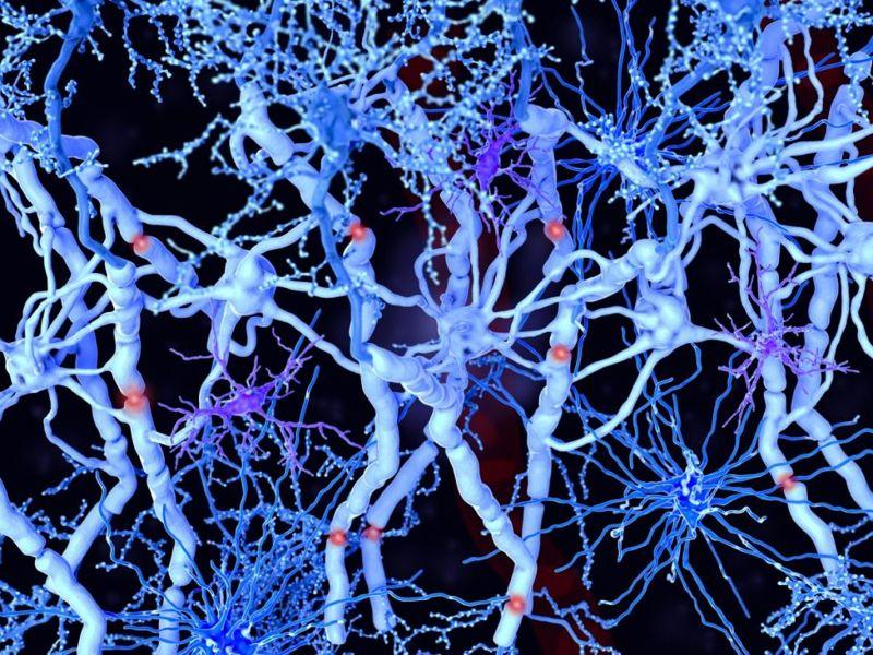 glial cells brain