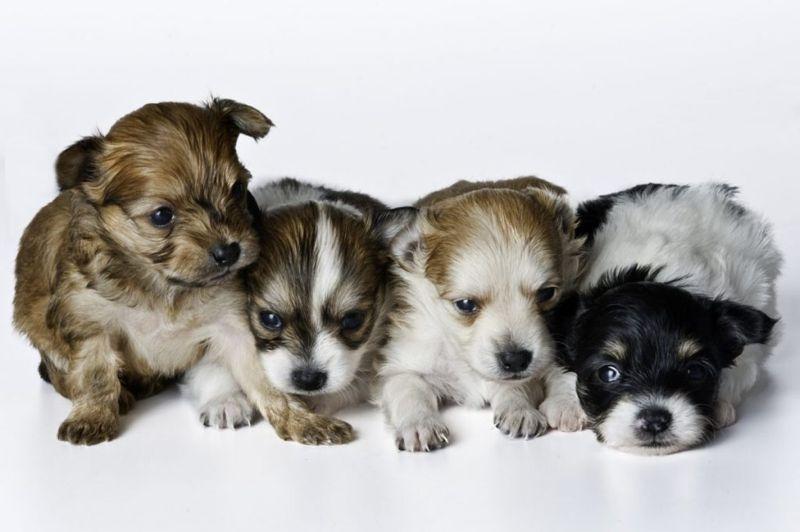 Nursing puppies