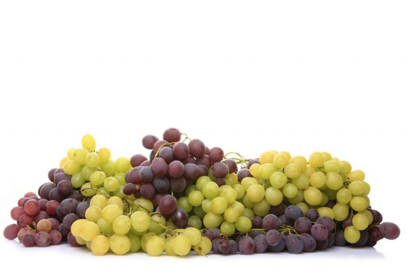 food, dogs, eat, grapes