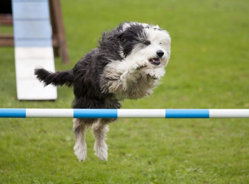 Enjoy agility competitions