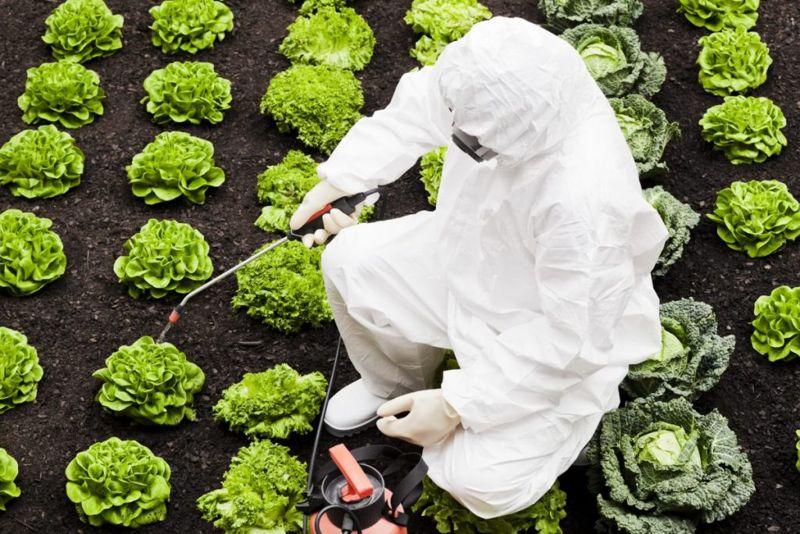 Herbicide GMO