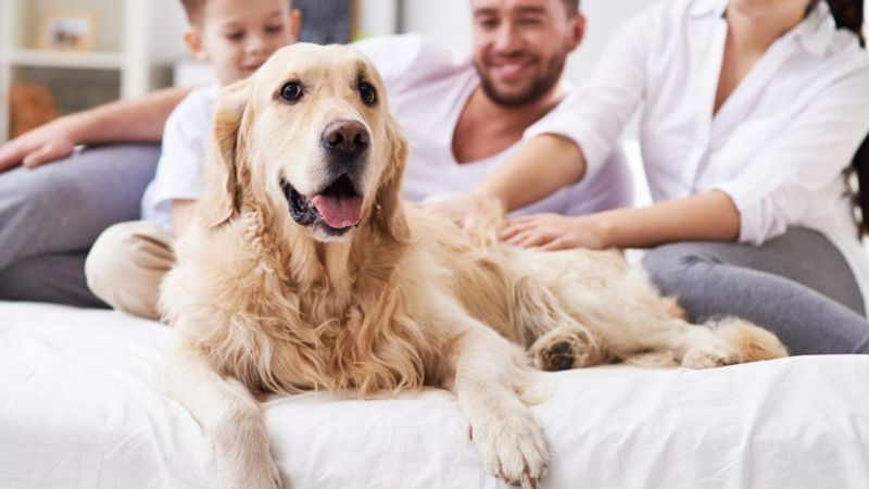 dog comfort home care