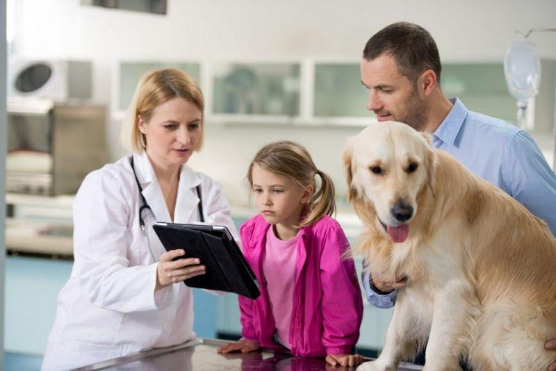 dog vet explaining owner medicine