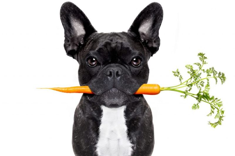 Dog holding carrot healthy snack