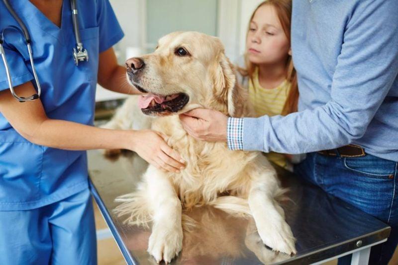 dog veterinarian symptoms Down Syndrome