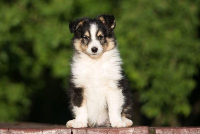 Puppy Socialize Cute