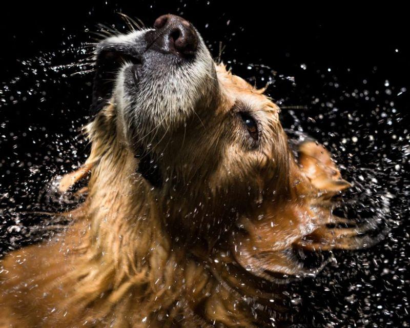 dog, temperature, perspire, body, heat