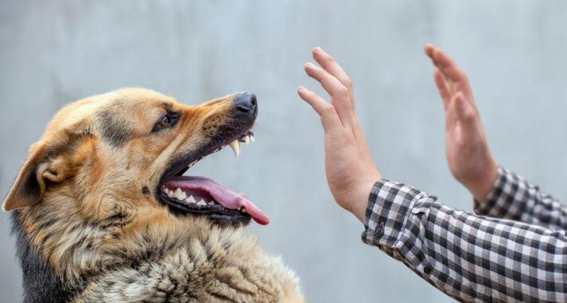 Dog biting at hands