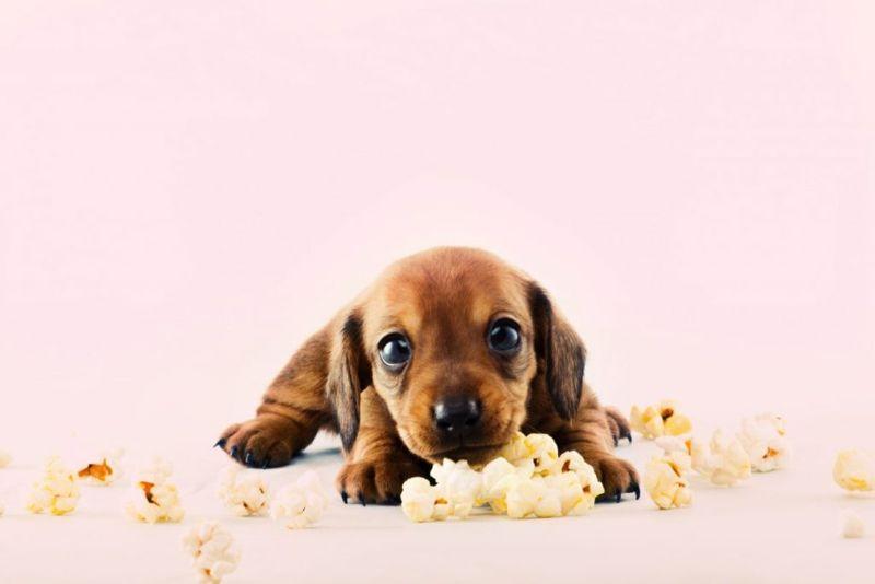 dog butter popcorn
