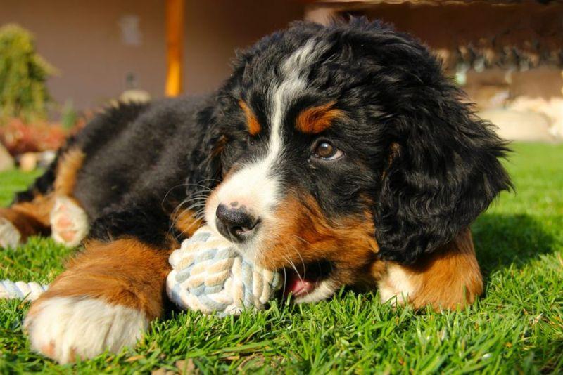 Cute Adorable Puppy