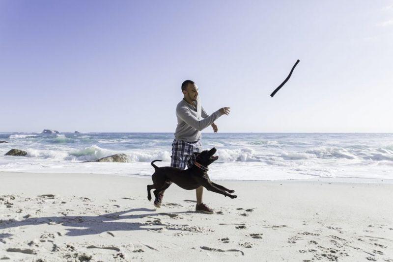 Dog playing fetch on beach
