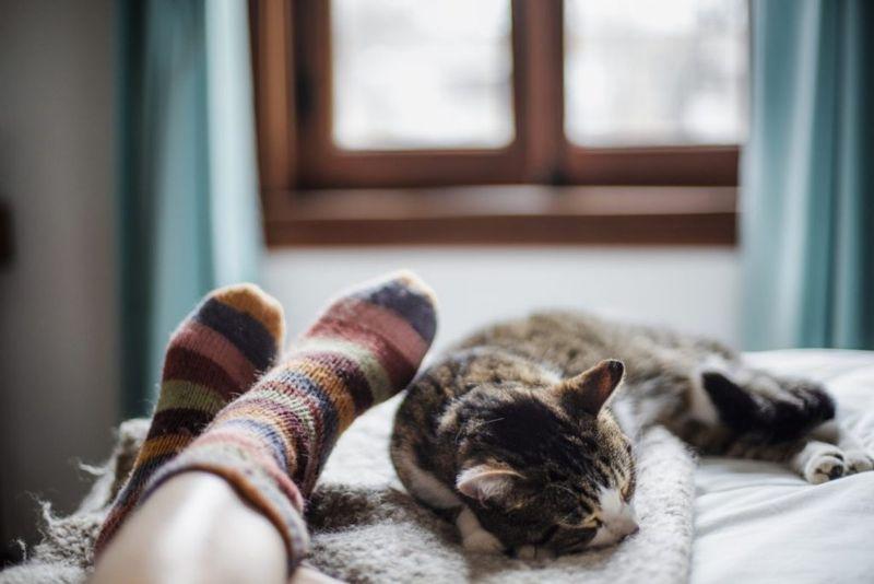 Cat Sleeping Bed
