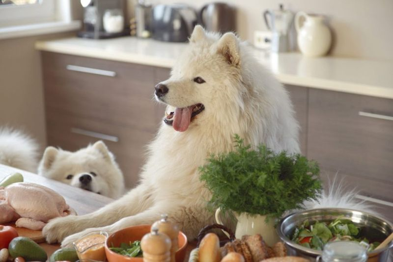 Dog healthy food vegetables carrots