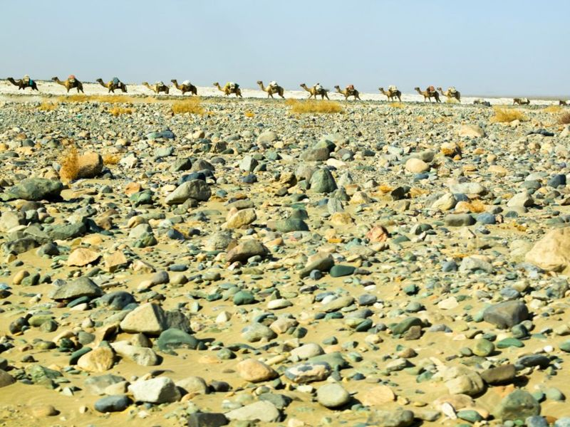 """""""Camel caravan in Africa's Danakil Desert. It is cruelest place on earth with baking temperatures, wastelands of salt, no trees and some very salty water. Only volcanic rocks, sand and salt."""""""