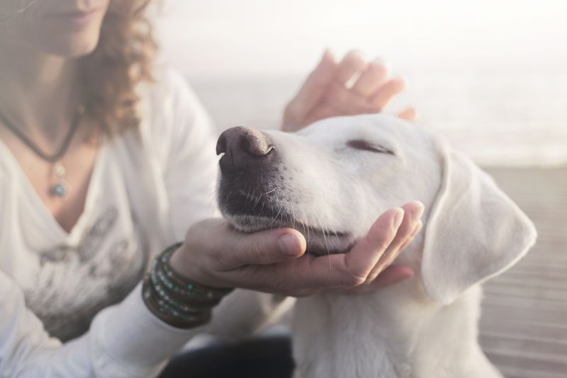 woman gently caresses her dog