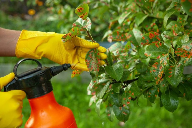 insects aphids fertilize