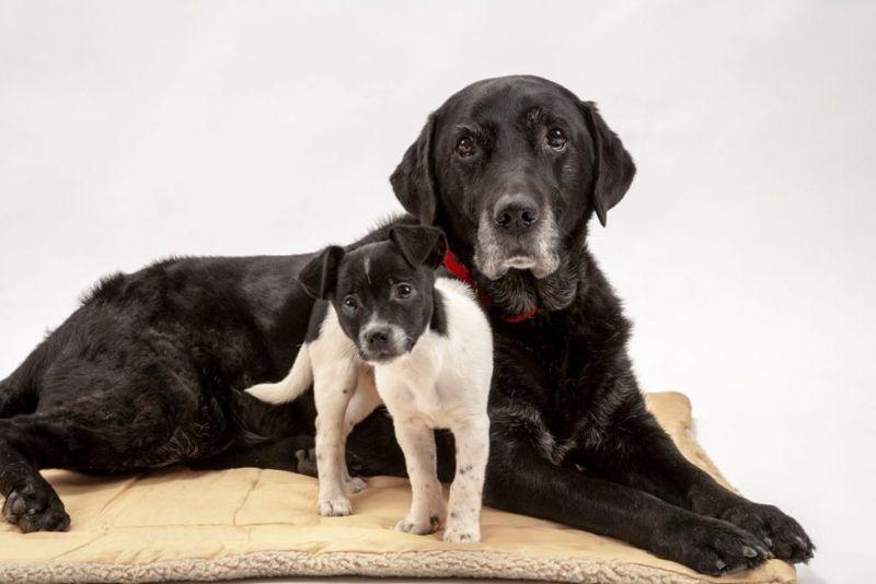 old dog puppy