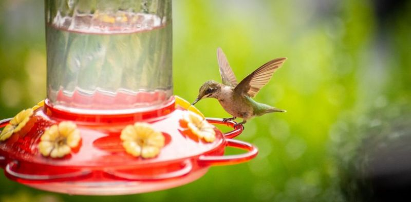 yellow flower hummingbird feeder