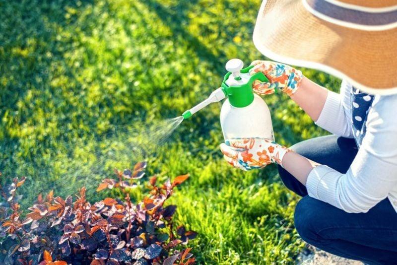 weed killer, vinegar, spray bottle,