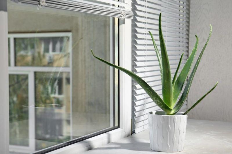 sunshine window ledge