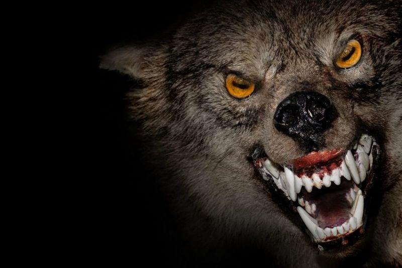 growling werewolf